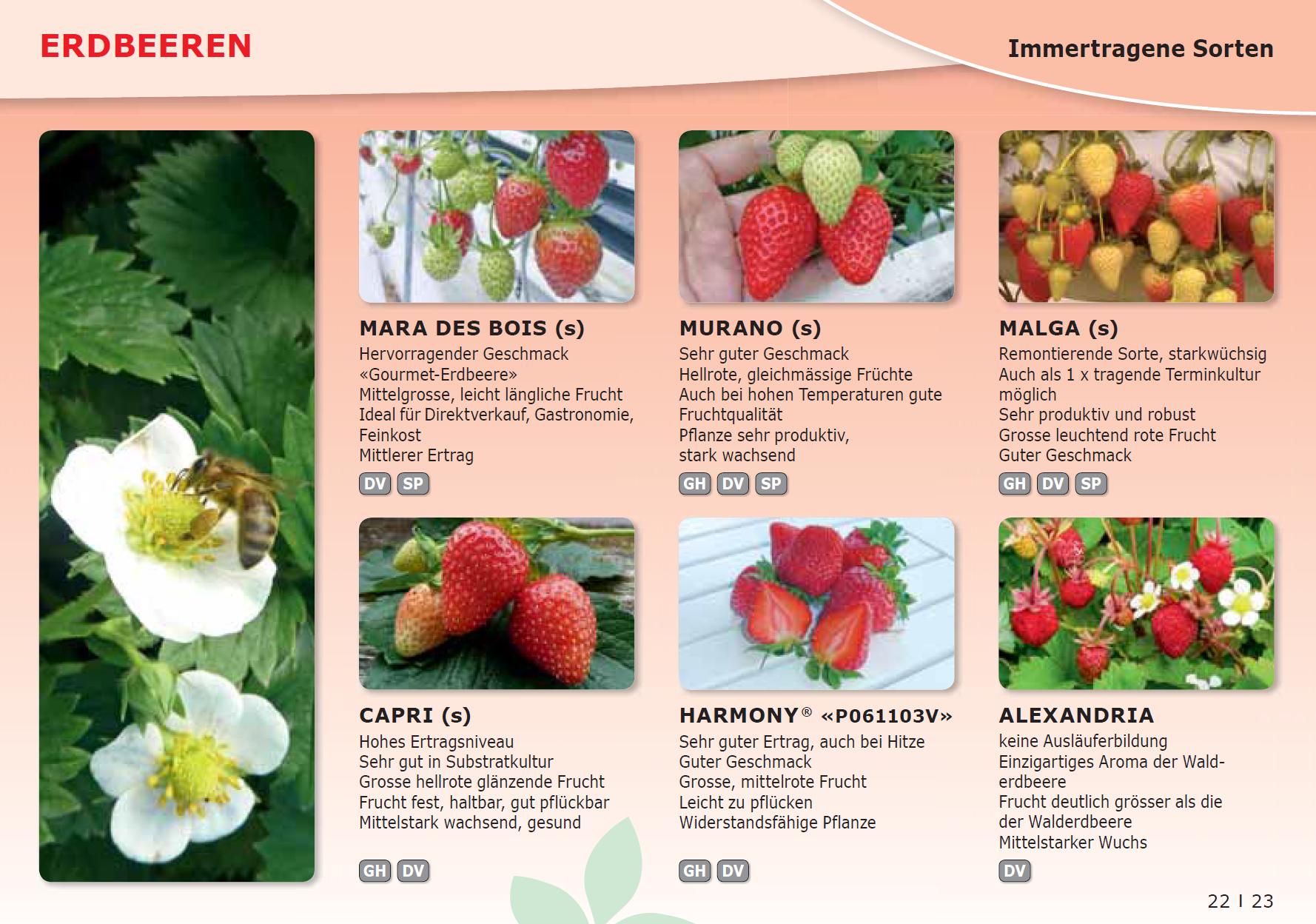 Hengartner Pflanzen Gmbh Erdbeeren Neukirch Egnach